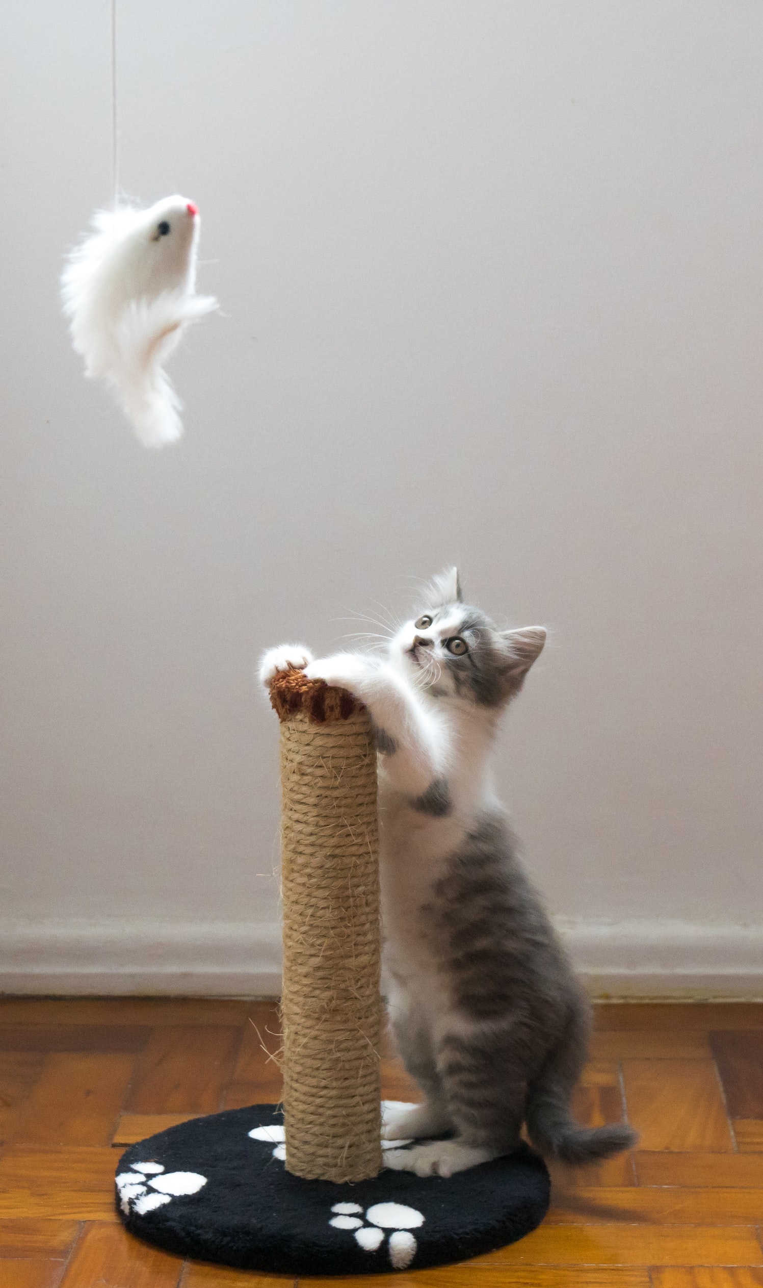 jugar con un gato